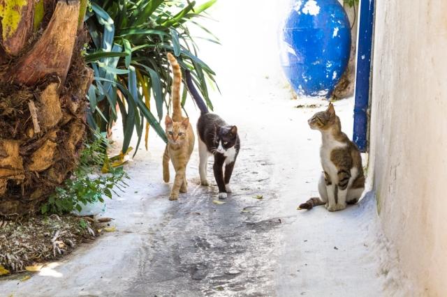Katzen von Athen